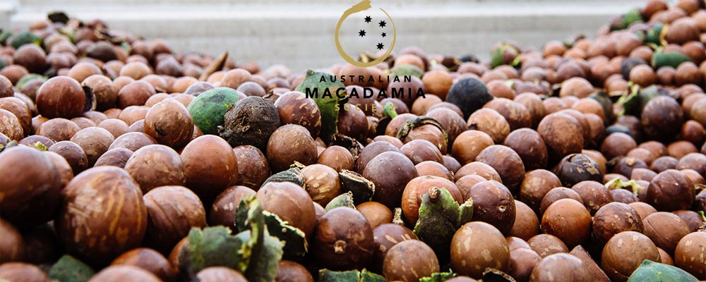 Macadamia-Banner-01